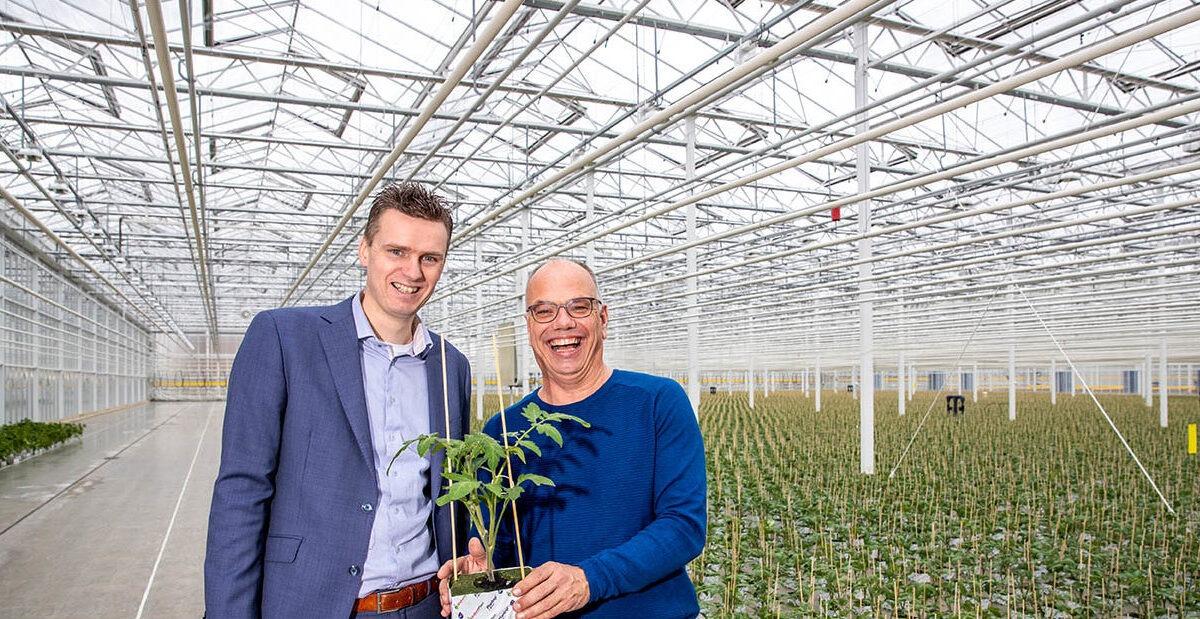 Brabant Plant